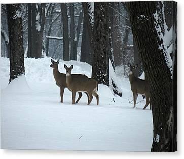 Three Deer In Park Canvas Print