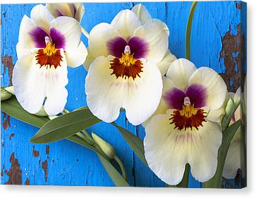 Three Exotic Orchids Canvas Print by Garry Gay