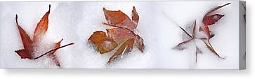 Three Fall Leaves In Snow Canvas Print by Panoramic Images