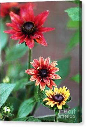 Three Flowers Canvas Print by John Rizzuto