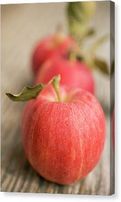 Three Gala Apples With Leaves Canvas Print