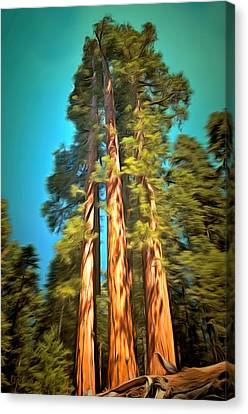 Three Giant Sequoias Digital Canvas Print by Barbara Snyder