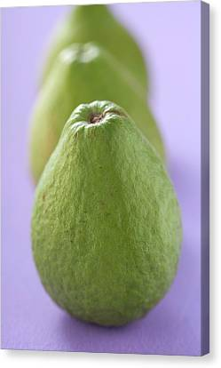 Three Guavas Canvas Print