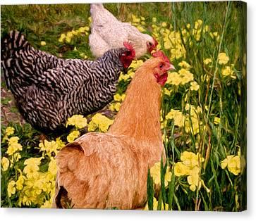 Three Hens Canvas Print by John K Woodruff