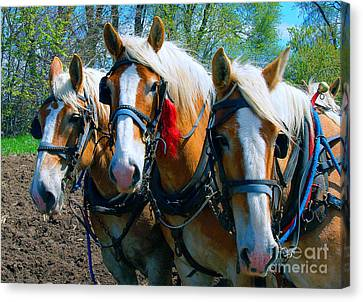 Canvas Print featuring the photograph Three Horses Break Time  by Tom Jelen