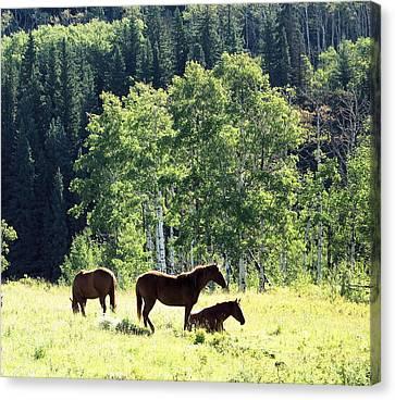 Three Horses Canvas Print by Gerry Bates