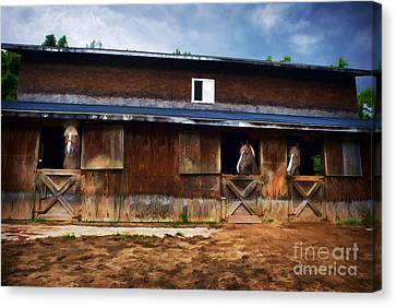 Three Horses In A Barn Canvas Print by Dan Friend