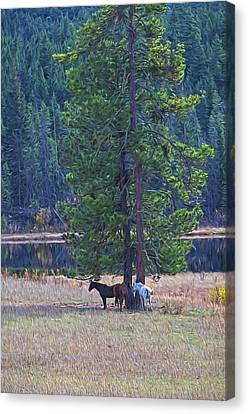 Three Horses Under A Pine Tree Digital Oil Painting Canvas Print by Sharon Talson