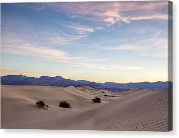 Three In The Sand Canvas Print by Jon Glaser
