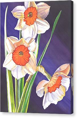 Three Jonquils Canvas Print by Catherine G McElroy