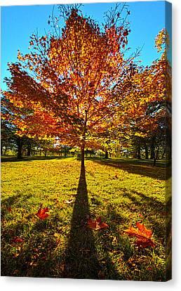 Three Leaves Down Canvas Print