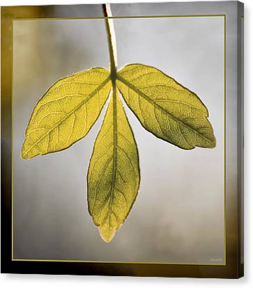 Canvas Print featuring the photograph Three Leaves by Jaki Miller