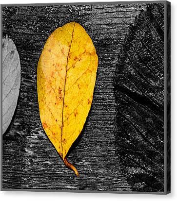 Three Leaves On Wood Texture Canvas Print