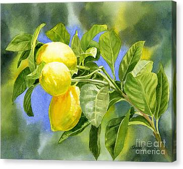 Three Lemons Canvas Print by Sharon Freeman