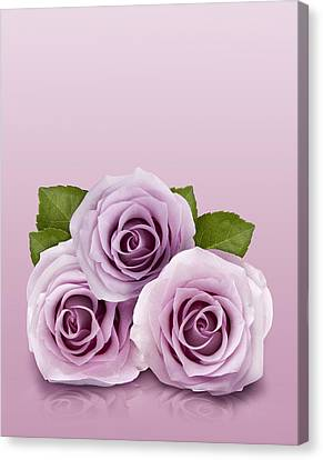 Three Lilac Roses Canvas Print
