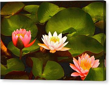 Three Lovely Gracious Waterlilies Canvas Print by Byron Varvarigos
