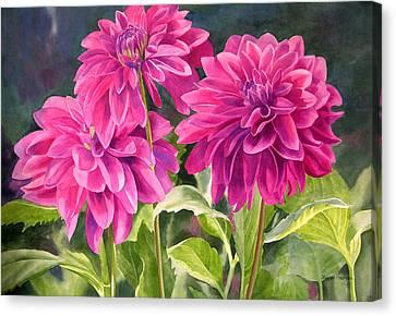 Three Magenta Dahlias Canvas Print by Sharon Freeman