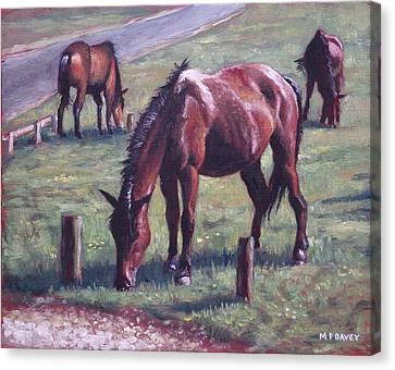 Three New Forest Horses On Grass Canvas Print