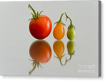 Canvas Print featuring the photograph Three Of The Kinds by Jonathan Nguyen