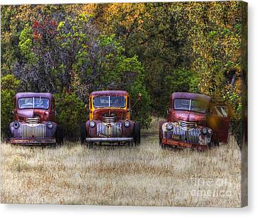 Three Old Friends Canvas Print by Kandy Hurley