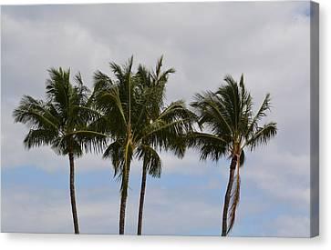 Three Palm Trees Canvas Print by P S