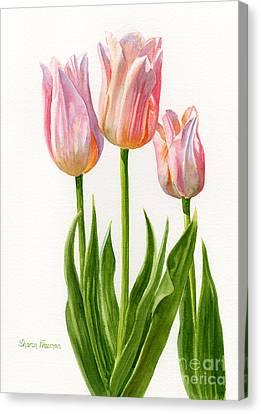 Three Peach Colored Tulips Canvas Print by Sharon Freeman
