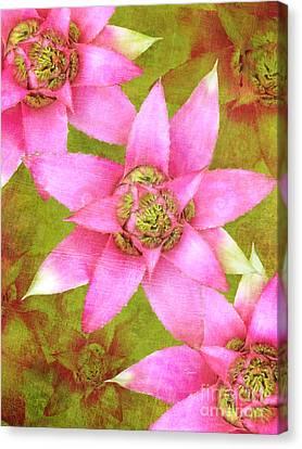 Three Pink Ladies Canvas Print