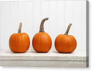 Three Pumpkins Canvas Print by Elena Elisseeva
