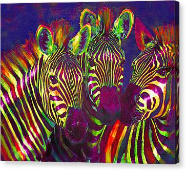 Three Rainbow Zebras Canvas Print