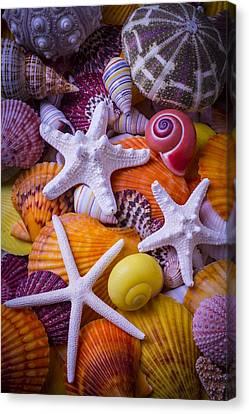 Seashell Fine Art Canvas Print - Three Starfish by Garry Gay