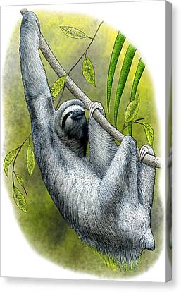 Three-toed Sloth Canvas Print