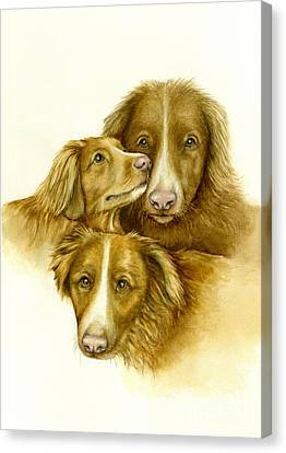 Three Toller Dogs Canvas Print