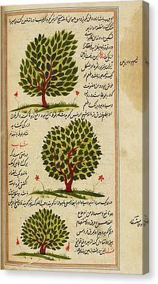 Three Trees Canvas Print by British Library