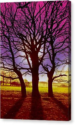 Canvas Print featuring the digital art Three Trees by David Davies