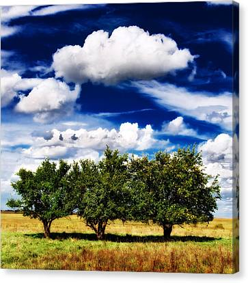 Three Trees Canvas Print by Eric Benjamin