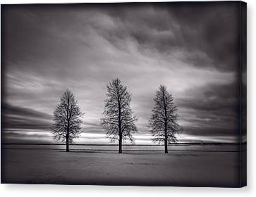 Three Trees Canvas Print by Steve Gadomski