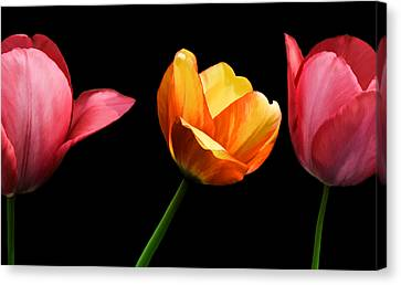 Spring Tulips Canvas Print by Steven Michael