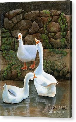 Three White Ducks Canvas Print