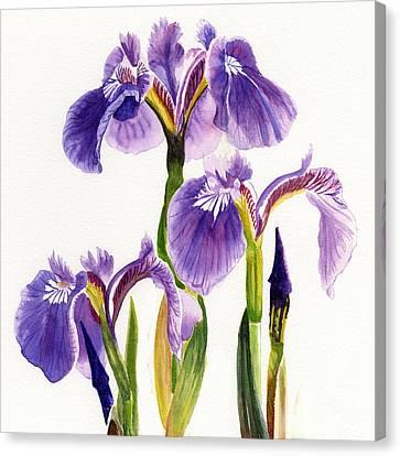 Three Wild Irises Square Design Canvas Print by Sharon Freeman