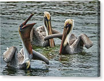 South Carolina State Bird Canvas Print - Three's Company by Joe Granita