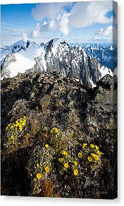 Canvas Print featuring the photograph Thriving In Adversity by Tim Newton