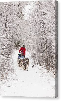 Through A Tunnel Of Snowy Trees Canvas Print by Tim Grams