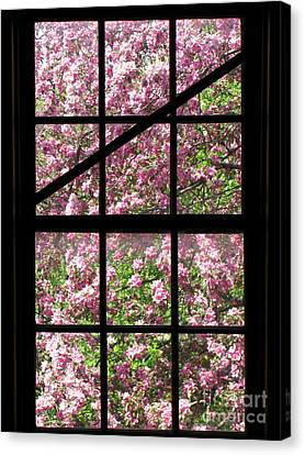 Cherry Tree Canvas Print - Through An Old Window by Olivier Le Queinec