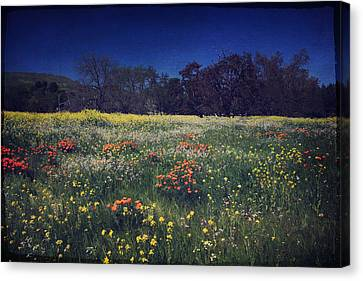 Oak Canvas Print - Through The Blooming Fields by Laurie Search