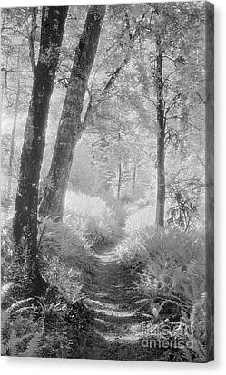 Through The Bush Canvas Print by Colin and Linda McKie