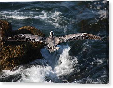 Through The Eyes Of A Pelican Canvas Print