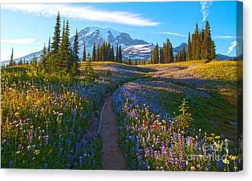 Through The Golden Meadows Canvas Print by Mike Reid