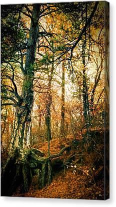Through The Island Forest Canvas Print