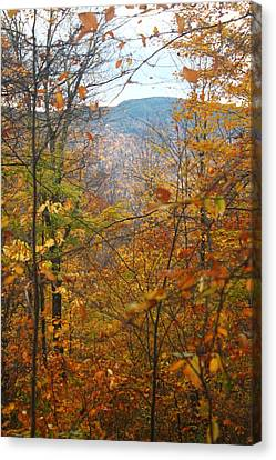 Canvas Print featuring the photograph Through The Leaves by Alicia Knust