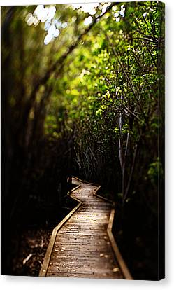 Canvas Print featuring the photograph Through The Mangroves by Heather Green